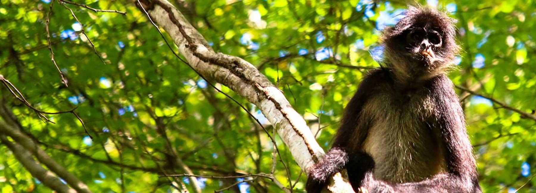Punta Laguna Monkey Sanctuary Private Tour Photo Workshop