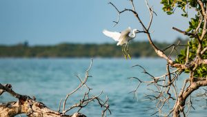 Egret Birdwatching Sian Kaan Private Tour Photo Safari