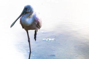 Birding in Riviera Maya Private Tour Photo Safari